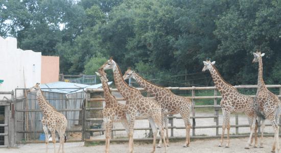 Zoos en folie