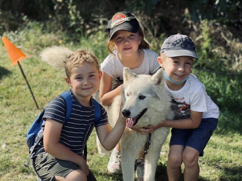 Nos amis les chiens nordiques